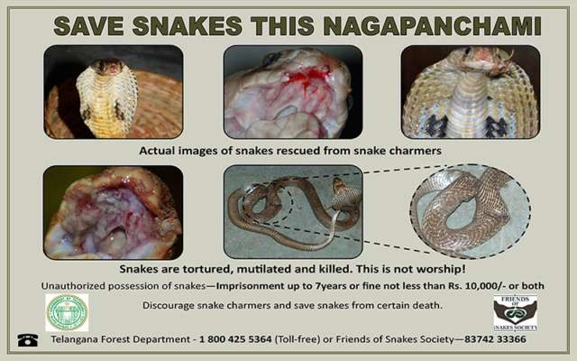 Forest wing joins NGO to curb violence against snakes - The