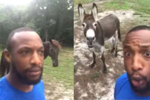 Watch: US Man and His Donkey Sing a Duet for The Lion King's