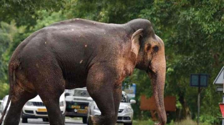 Hyderabad: Busy elephants have low fertility - Deccan