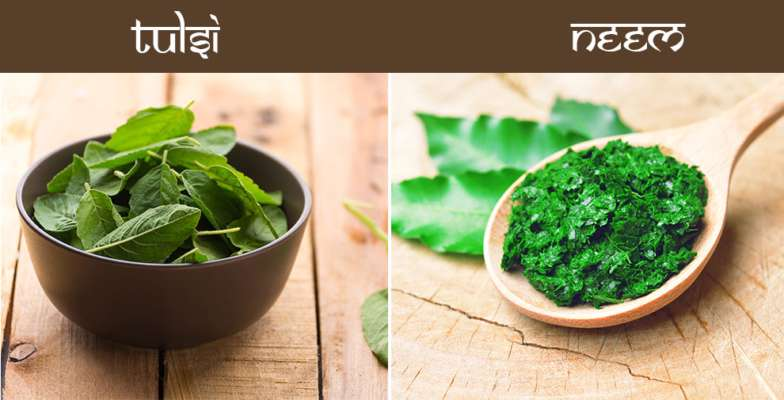 Which is better for my skin – Neem or Tulsi? - Hamam English | DailyHunt