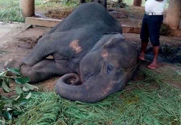 Elephant menace: Elderly man crushed to death, couple